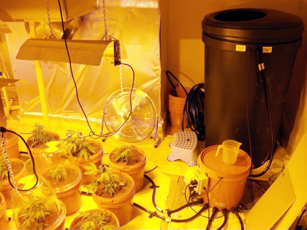 The cannabis farm in the multiple occupancy house